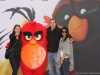 Angry Birds 37